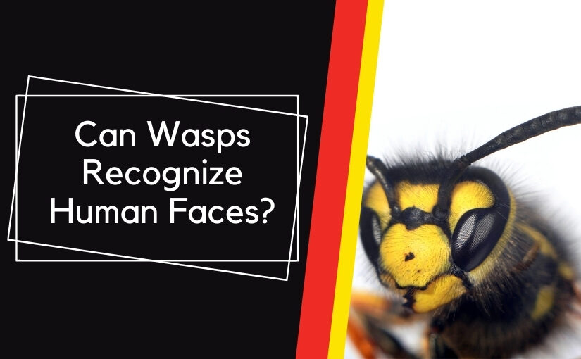 Can Wasps Recognize Human Faces_