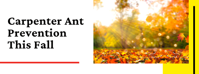 Carpenter Ant Prevention This Fall