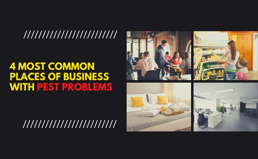 4 Most Common Places of Business With Pest Problems