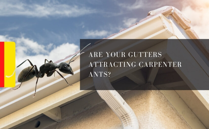 Are Your Gutters Attracting Carpenter Ants_