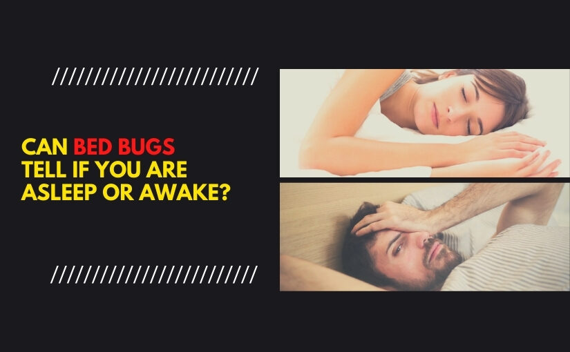 Can Bed Bugs Tell If You are Asleep or Awake_